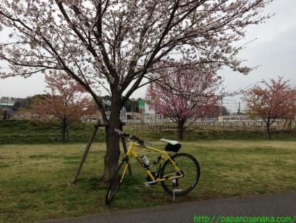 2013_03_20 02 大堀川リバーサイドパークの桜