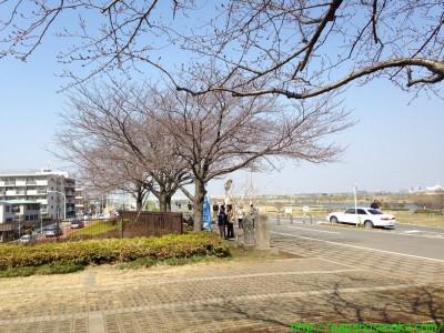 2014_03_16 03 柴又公園の人出も多くなって…