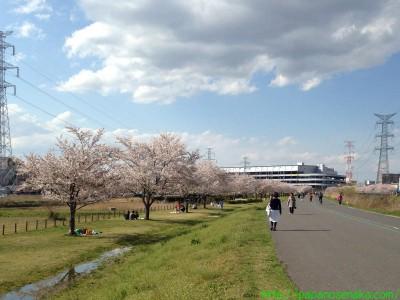 2014_04_05 07 手賀沼サイクリングロード