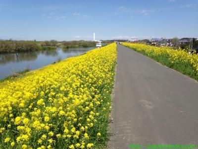 2014_04_05 02 菜の花ロード