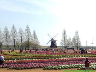 2014_04_13 01 あけぼの山農業公園のチューリップ