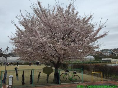 2015_04_04 01 富士川親水公園