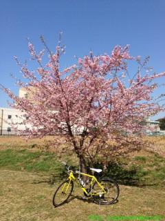 2013_03_17 桜とRX3