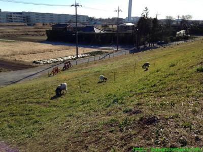 2014_01_19 03 草刈り…