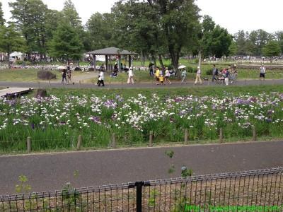2013_06_09 03 水元公園はしょうぶまつり