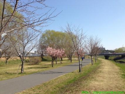 2013_03_17 桜とか2