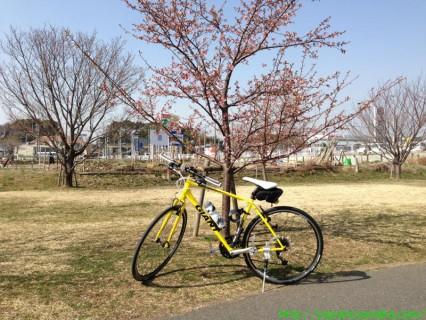 2013_03_09 04 大堀川リバーサイドパークの桜