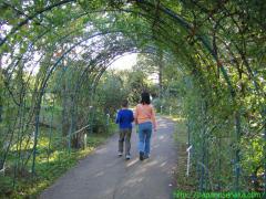 2008_11_02 バラのトンネル.JPG