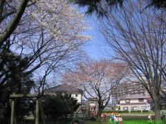 2009_04_03 お花見はお父さん抜きで 2009.JPG
