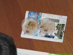 2010_05_04 観察日記.JPG
